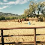 My son learning to trot and lope on his horse