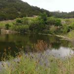 Pond on walking path - keep an eye out for vultures....