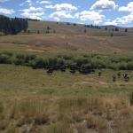 TCR Cattle Drive