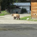 Grizzly alert!