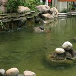 Pond with turtles and fish
