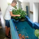 pool with small fishes