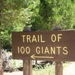 Photo of Trail of 100 Giants
