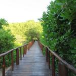 Elevated pathways preserve nature