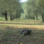 Photo of L'Aia Country Holidays