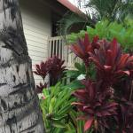 Foliage (Red and green Ti plants) and building