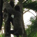 A Sloth was rescued from the road out the front of the resort and put back in the tree