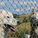 Howlers Inn Bed & Breakfast and Wolf Sanctuary의 사진