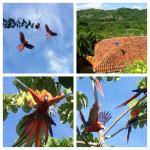 Hotel Punta Islita - macaws flying over hotel