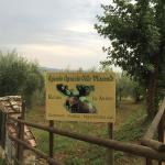 Zdjęcie Agriturismo Le Anfore