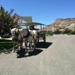 Ask us how to make reservations for vineyard tours in a horse drawn carriage.