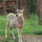 Ruidoso Wildlife