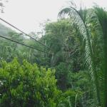 Zip-line through the jungle