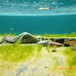 under the water - so clear it is amazing