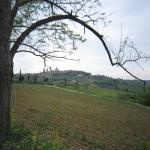 Overlooking the vineyards toward San Gimignano