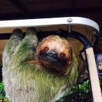 The sloth we saw up close and got to pet