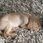Little Chica being a well trained puppy and sleeping outside the Namakal