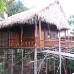 Foto de Tariri Amazon Lodge