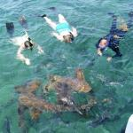 Snorkeling with sharks.