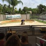 Photo of Everglades Alligator Farm
