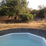 Photo de Vuyani Safari Lodge