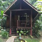 Photo of Our Jungle House