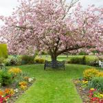 Grovefield Blossoms