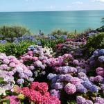 Amazing gardens and sea view