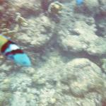 Lots of bright tropical fish while snorkeling