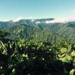 Santa Lucia Cloud Forest