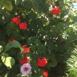 Beautiful flowers and fruits in the gardens
