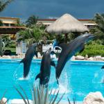Great dolphin show.
