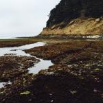 Tidal pools at low tide on Moss Beach.