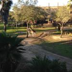 View of the Savanna from the room