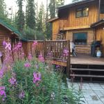 Denali Mountain Morning Hostel and Cabins