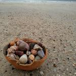 Lots of shells to collect