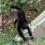 A view from the pool- a monkey coming down for a quick snack