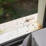 Nice view from our breakfast table of some form of pest droppings!