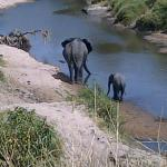 Elephants in the Reserve