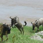 African Scenic Safaris - Day Tours