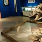 Saying good by to the dinosaur bones at the Science Museum