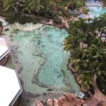 The stingrays below our room. Photo taken from The Atlantis Coral Towers
