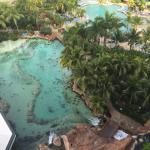 A beautiful view from the 9th floor of the Atlantis Coral Towers overlooking the stingray bay, a