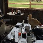 A wonderful place with a lot of animals: chicken around the place (and on tables)...and of cours