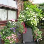 Colourful window boxes and hanging baskets outside a garden room ...