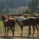 Red Horse Mountain Dude Ranch Foto