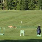 Looks like the deer wanted some golf lessons