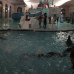 Pano of indoor swim area