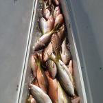 Offshore Hunter Fishing Charters