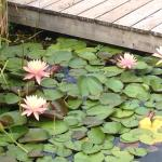 Flowers in our natural swimming pool! Fruit salads, pool house under construction, our guest 'li